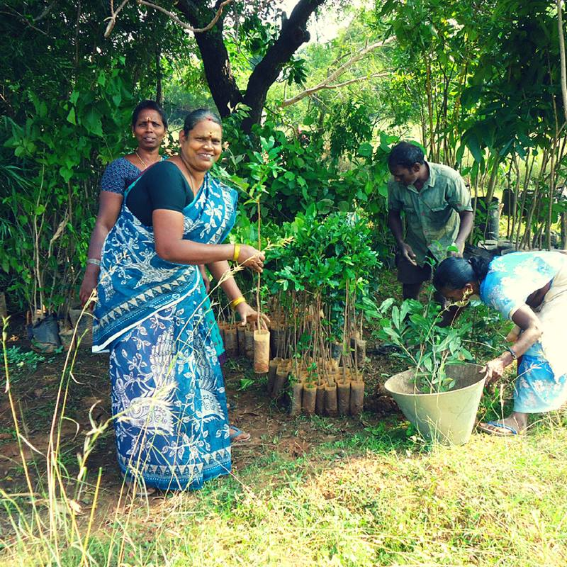 Photo Credit: Pitchandikulam Bio Resource Center