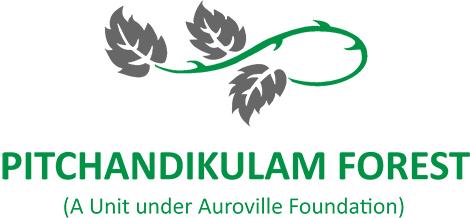Pitchandikulam: Nadakuppam Forest